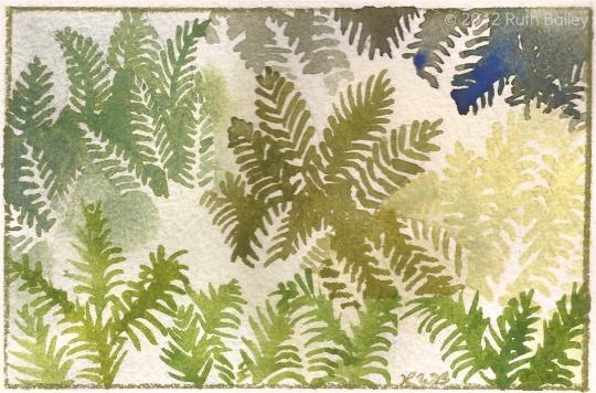 "Ferns, watercolor, 3.5"" x 5.25"""