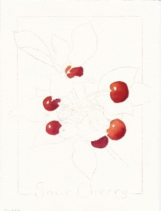 "Cherry #2, stage 1, watercolor, 7"" x 5"""