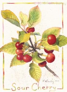 """Sour Cherry (#2), watercolor, 7"""" x 5"""""""