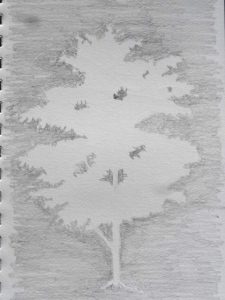 Negative space - everything that is not the tree.