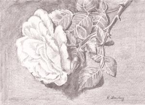 """Rose, pencil, 5"""" x 7"""""""