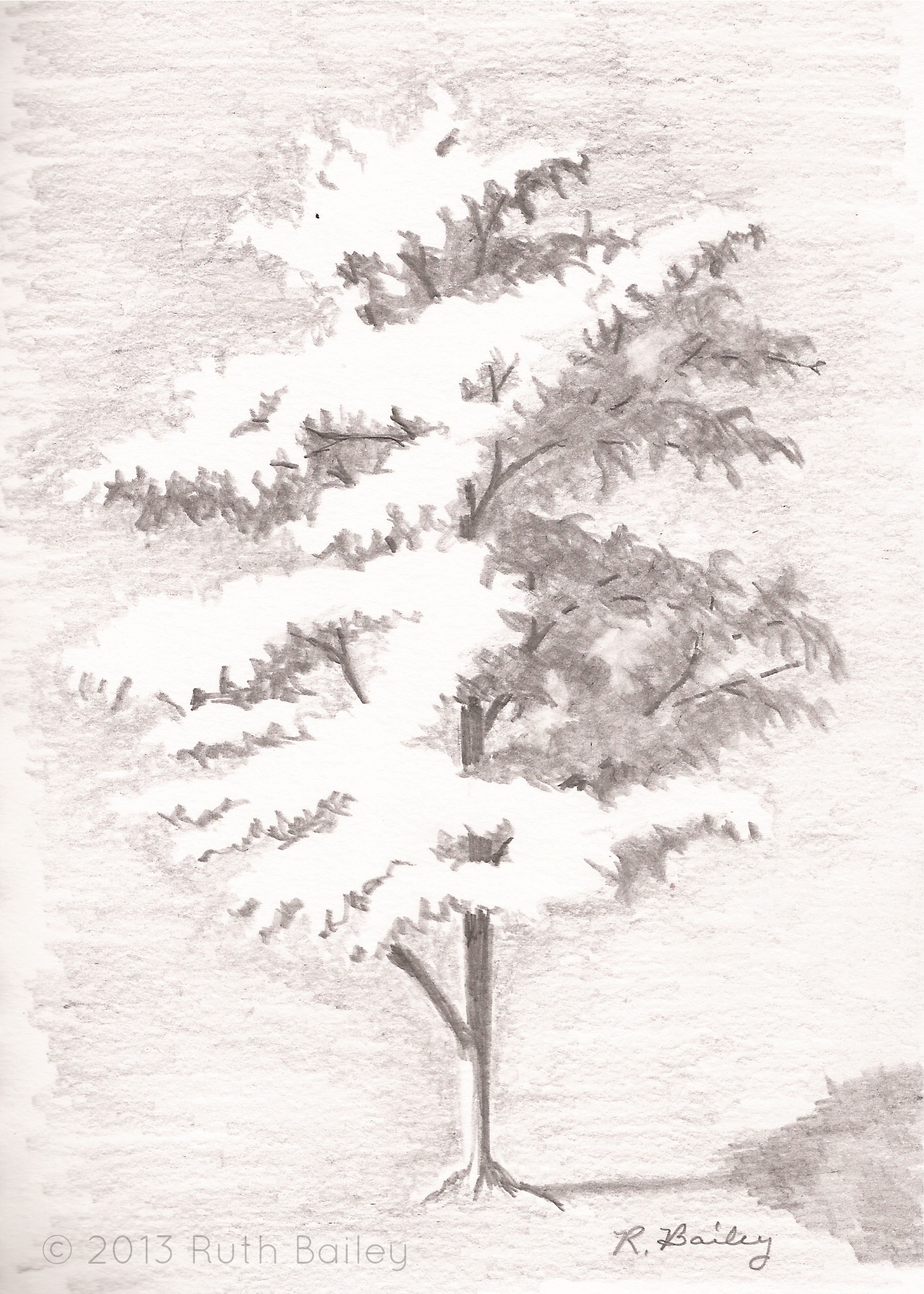 timeout for art drawing a tree u2013 ruth bailey artist