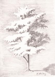 "Sunlit Tree, pencil, 7"" x 5"""
