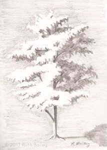"Sunlit Tree, pencil, 7"" x 5"""