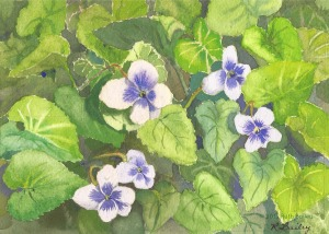 "White Violets, watercolor, 5"" x 7"""