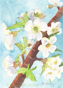 Cherry Blossoms (2014), watercolor, 7