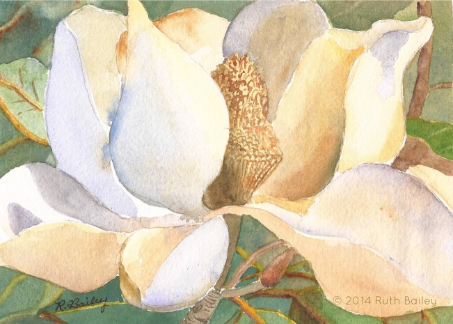 Magnolia Blossom, watercolor, 5