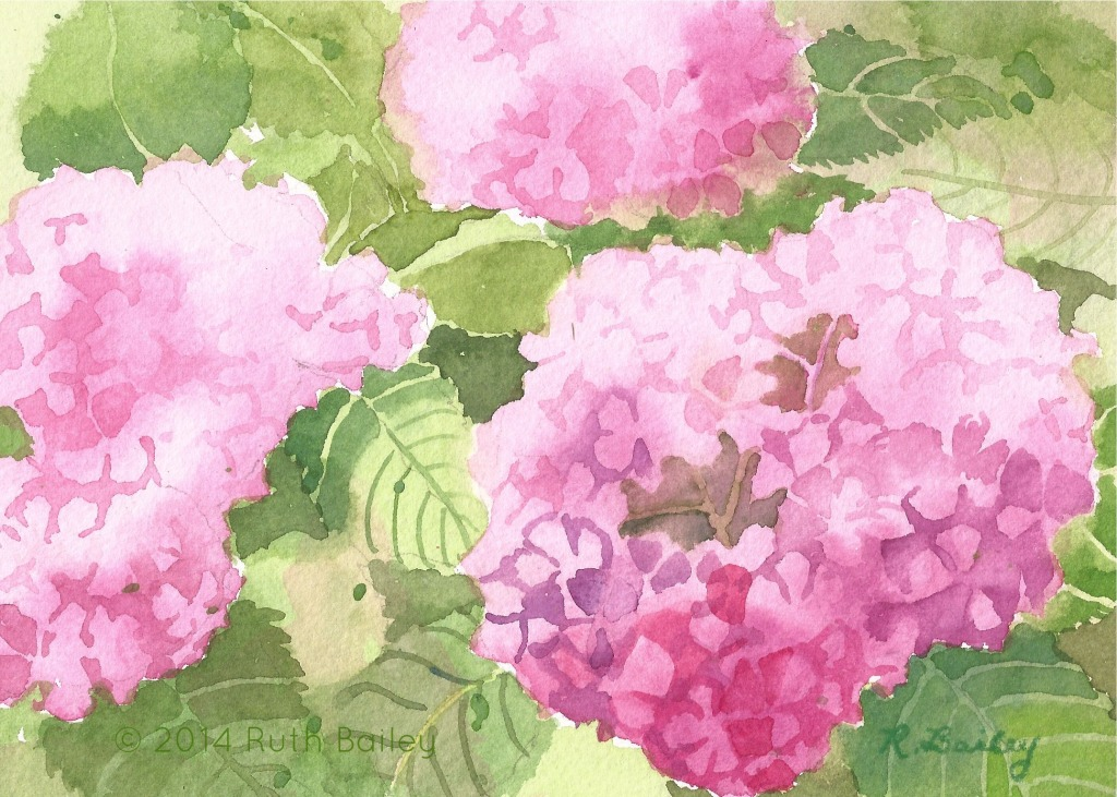 "Pink Hydrangeas, watercolor, 5"" x 7"""