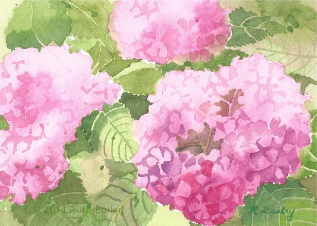 Pink Hydrangeas, watercolor, 5