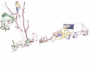 """Tree Limb Removal, pen and ink with watercolor, 9"""" x 12"""""""