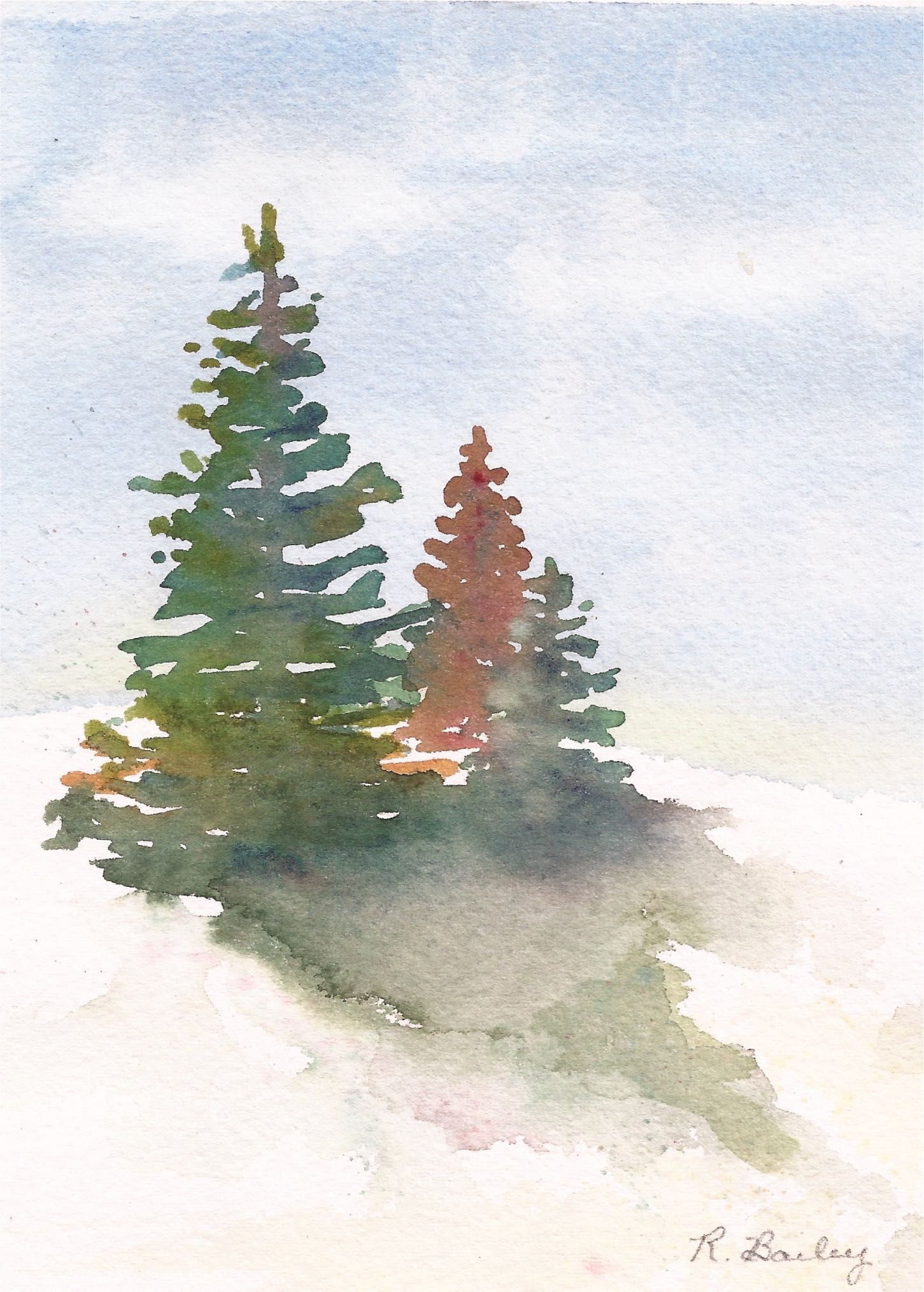 Winter Evergreens Ruth Bailey Artist