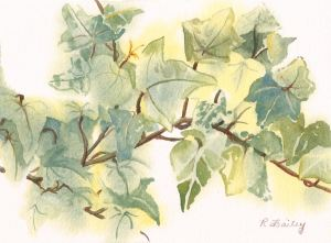 "A Sprig of Ivy, watercolor, 5"" x 7"""
