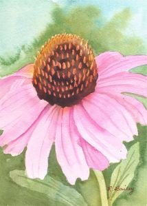 "Coneflower, watercolor, 7"" x 5"""