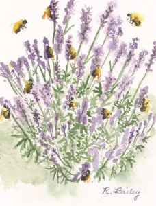 "Lovin' the Lavender, watercolor, 7"" x 5"""