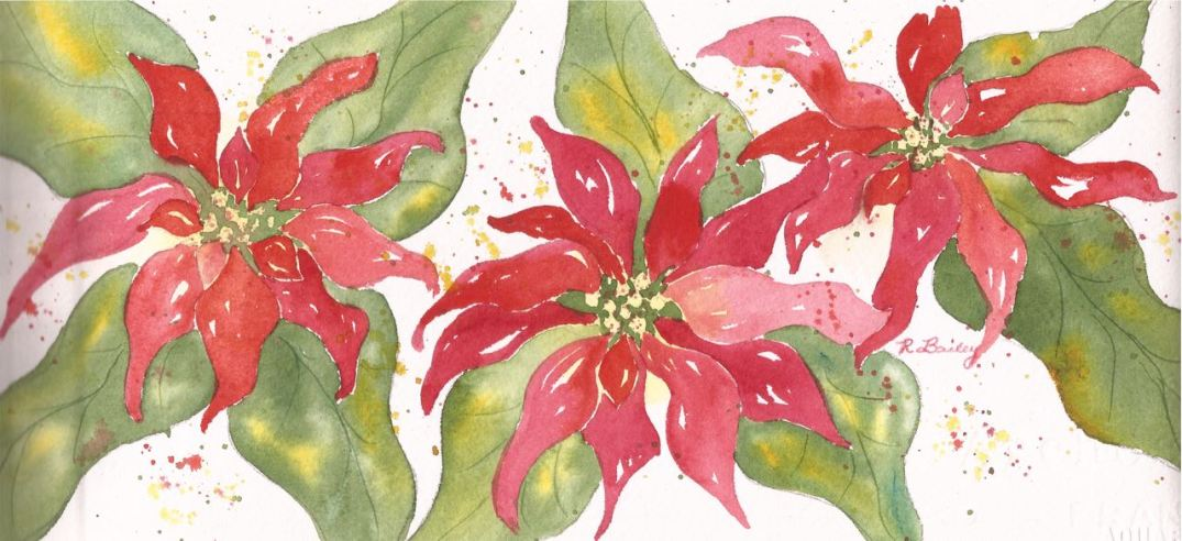 Poinsettias (1)
